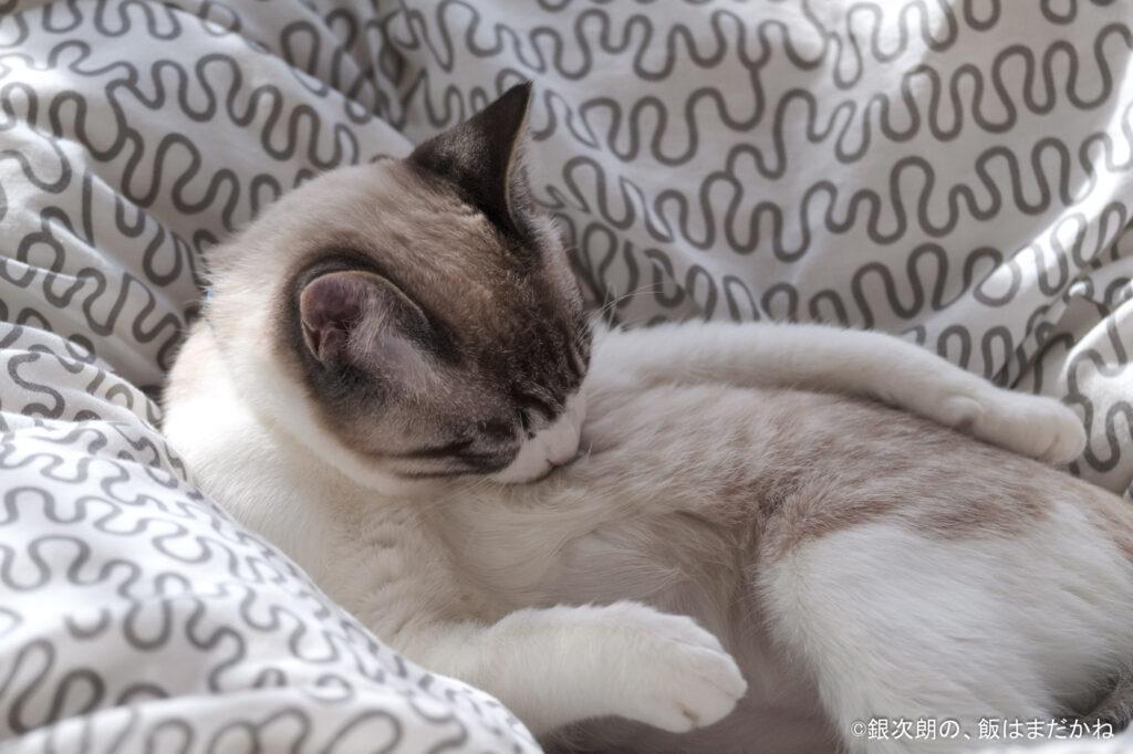 キレイに毛をグルーミングしている猫