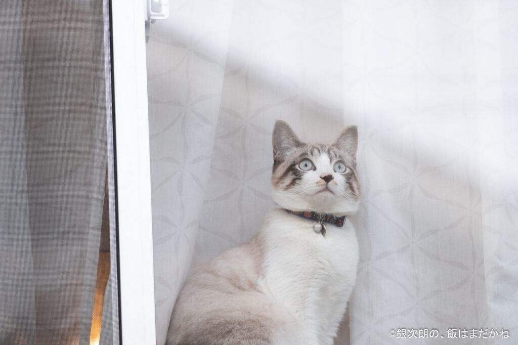 ひとりで窓辺に静かに座っている猫の画像