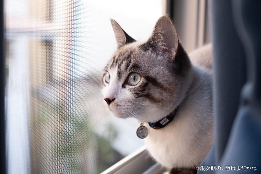 猫が窓辺にいるイラスト。考えている様子。