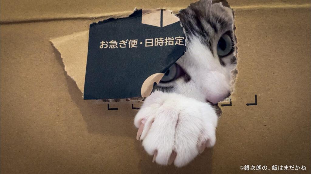 猫の銀次朗が段ボール箱を破ってこちらをのぞいている画像